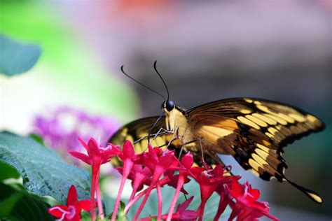 Free Images : nature, wing, flower, petal, food, tropical