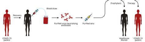 Why We Need Antigen and Antibody Tests for COVID-19 - The