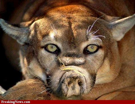 Hybrid Animals Pictures Gallery - Freaking News   Animals